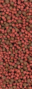 Pełnoporcjowa sucha karma dla psów DINO z wołowiną - 20kg