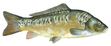 najlepsza pasza dla ryb Aller Aqua