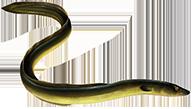 pasza dla węgorzy Aller Aqua Ivory 5kg